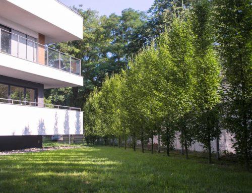 Zeleň na sídliskách